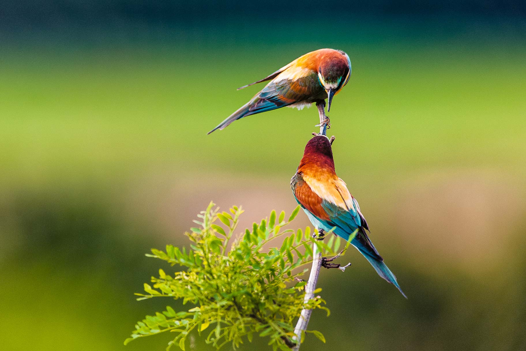 natura.uccellini